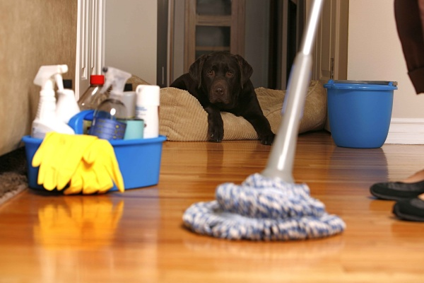 Domestic Cleaning Bristol